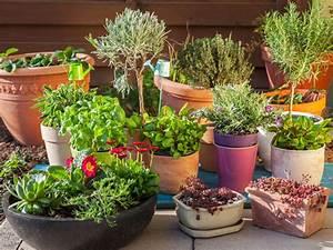 Pflanzen Für Balkon : welche pflanzen f r welchen balkon von balkongr e balkonlage und den jahreszeiten aus der ~ Sanjose-hotels-ca.com Haus und Dekorationen