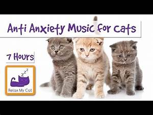 funny cat dancing on 39wigle wigle wigle39 doovi With anti anxiety dog music