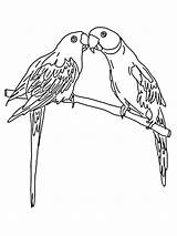 Parrot Coloring Pages Animals Printable Birds sketch template