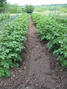 Hickery Holler Farm  The Many Ways To Grow A Potato