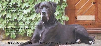 Dane Checks Danes Personal Dog Dogs Check