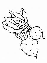 Coloring Beet Pages Vegetables Beets Template Sheet Vegetable sketch template