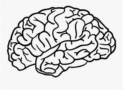 Brain Outline Drawing Clipart Transparent Clipartkey