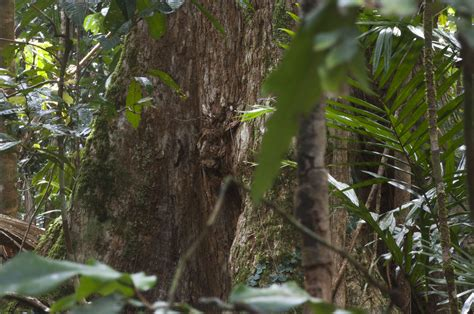 DAINTREE RAINFOREST FOUNDATION LTD Daintree Rainforest