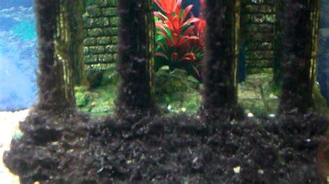 aqua   aquarium  painted blue background black