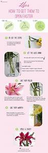 Types of Lilies - this handy chart gives a quick overview ...