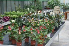 Pflanzen Für Innen : pflanzen f r innen ~ Michelbontemps.com Haus und Dekorationen