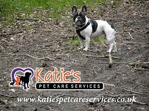 Dog walking in the Watford area - Dog Walkers Watford