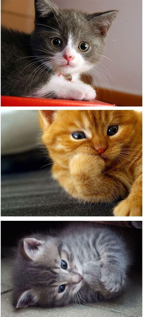 gambar koleksi gambar kucing  seriusly cuteness