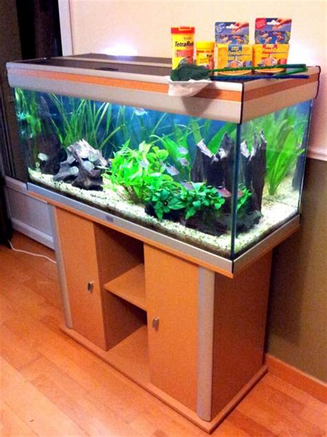 installation aquarium eau douce decorer un aquarium d eau douce 28 images id 233 e d 233 coration aquarium eau douce esth