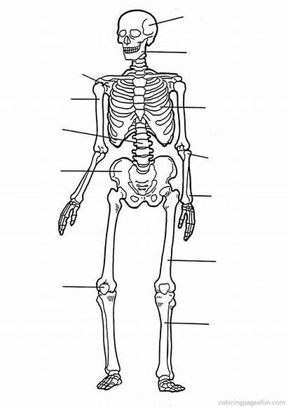 Human Coloring Skeleton Anatomy Printable Pages