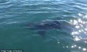 Big Boat Runs Over Fishermen by Fisherman Films 14ft Shark Swimming Off Cornwall Coast
