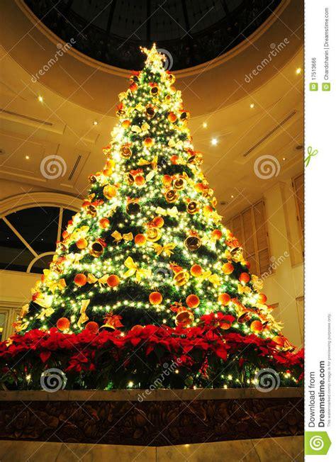 chrismas tree royalty free stock image image 17513666