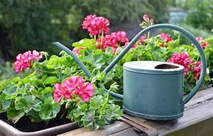 Hängepflanzen Für Balkonkästen : pflanzen f r den balkon bl tenmeer f r den sommer ~ Michelbontemps.com Haus und Dekorationen
