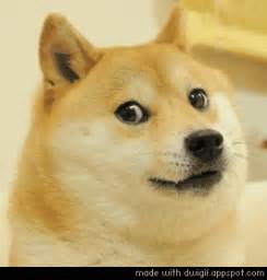 Doge GIFs - Get the best GIF on GIPHY