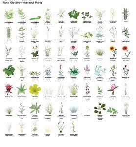 Free, Botanical, Sets, Of, Icon, Illustrations