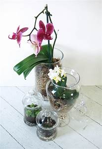 Orchid Terrariums - How Did You Make This? Luxe DIY