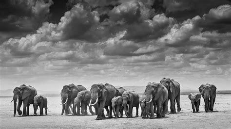 david yarrow biography natural world safaris