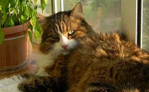 Enlever Odeur Urine Chien : 10 astuces pour supprimer l 39 odeur d 39 urine ou pipi de chat ~ Nature-et-papiers.com Idées de Décoration