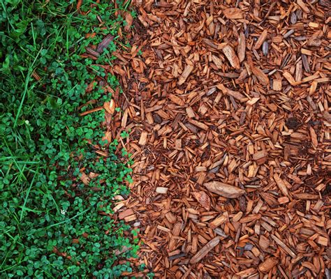 purpose of mulch what is mulch and which mulch should you use where