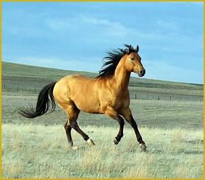 Dun Drift - Harmon Quarter Horses