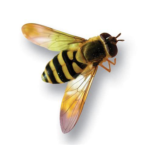 honey bee   clip art  clip art