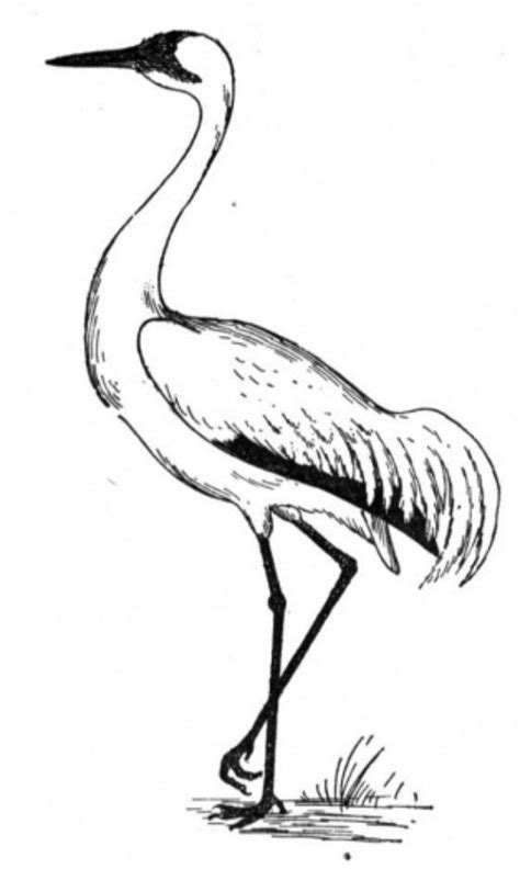 Crane Bird Coloring Pages for Kids   Bird coloring pages
