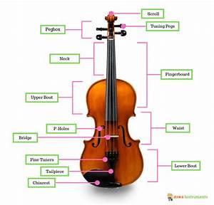 Parts Of A Violin