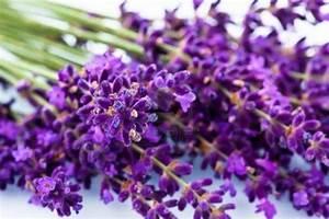 blossoms: Lavender
