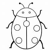 Coloring Insect Pages Ladybug sketch template