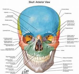 Skeleton Skull Diagram