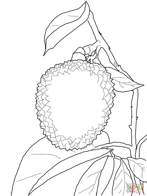 lychee fruit drawing lychee coloring page free printable coloring pages