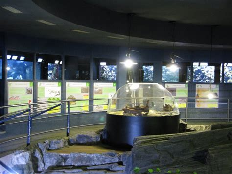 aquarium de la porte doree emilie biens travail 224 l aquarium de la porte dor 233 e