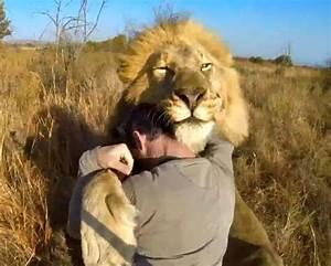The Wild Hug : man hug the lion and lion on pinterest ~ Eleganceandgraceweddings.com Haus und Dekorationen