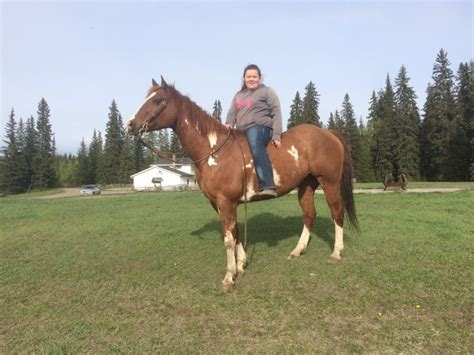 horse canada ad strong horses bc