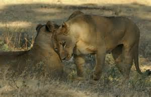 Female Mammals
