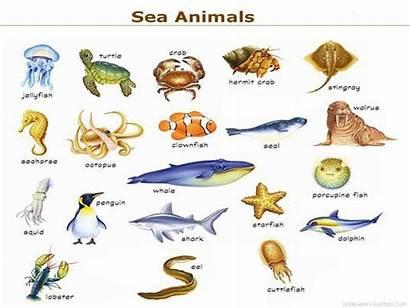 Animals Sea Names Water Animal Clipart Marine
