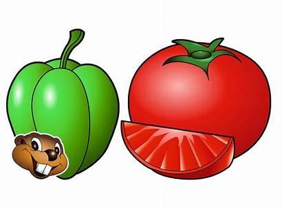 Vegetables Vegetable Names Children Veggie Song Clipart