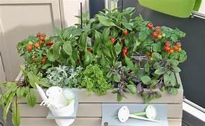 Tomaten Balkon Kübel : 1064 besten g rtnern bilder auf pinterest g rtnern balkongarten und blumengarten ~ Yasmunasinghe.com Haus und Dekorationen