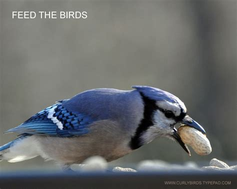 easiest way to feed the birds sprinkle some peanuts on a