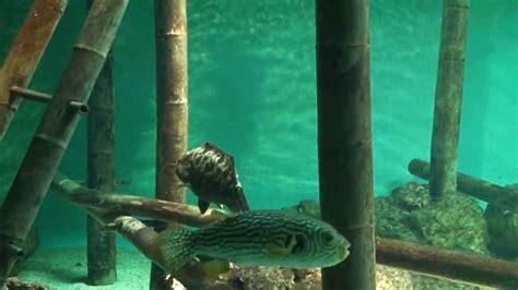 aquarium bourgenay 28 images ecole el 233 mentaire jacques androuet ducerceau l aquarium de