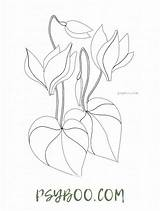 Water Lily Coloring Nenuphars Printable Flowers sketch template