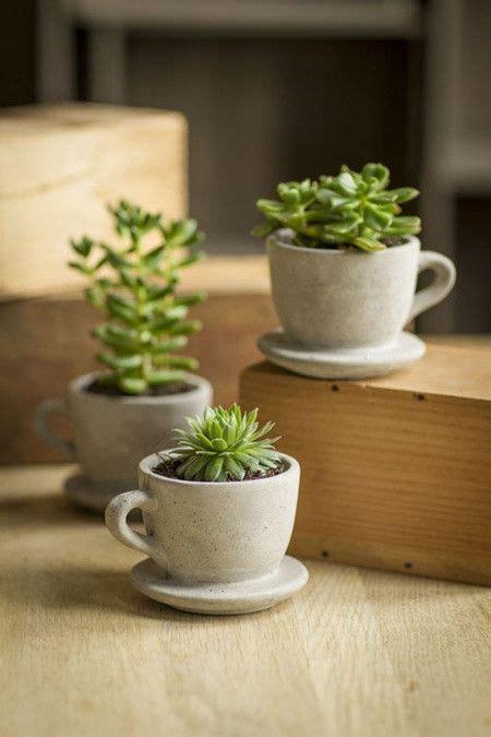 succulents planters cute  desk plants succulents home plants architectural plants