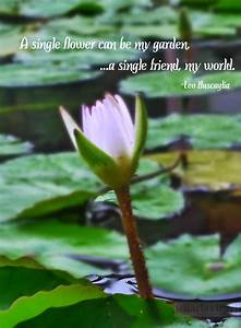 Famous quotes a... White Water Lily Quotes