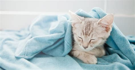 why does my cat bite and hump blankets