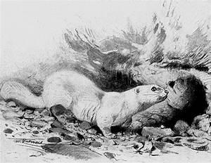 Tiere Vertreiben Ultraschall : kaninchen vertreiben norax kaninchen schock i kaninchen ~ Articles-book.com Haus und Dekorationen