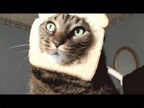 cat toast youtube