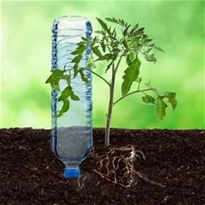 Arrosage Des Tomates : de l eau pour vos tomates lors des vacances ~ Carolinahurricanesstore.com Idées de Décoration
