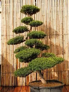 Arbre En Nuage : nos arbres en nuages art borescence ~ Melissatoandfro.com Idées de Décoration
