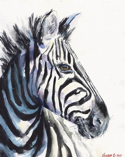 Zebra Watercolor Painting Prints Reproduction Zebre